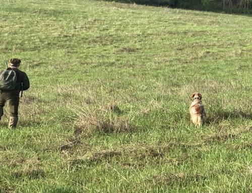 Caccia col cane da sogno: la riserva di caccia Montefeltro Rivergaro (PC) vi aspetta!