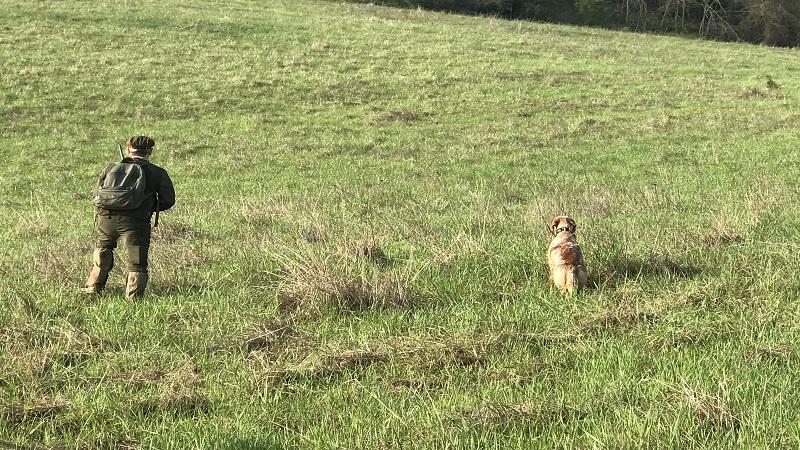 caccia mista con cane