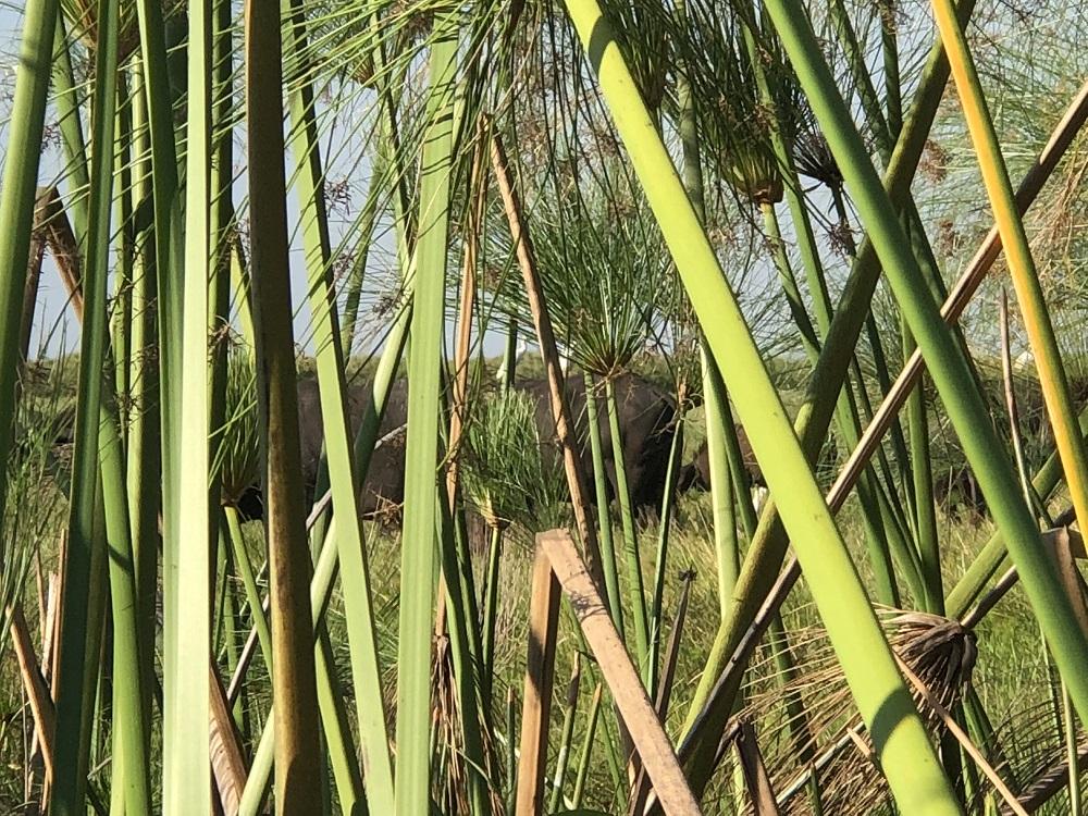 viaggia di caccia mozambico