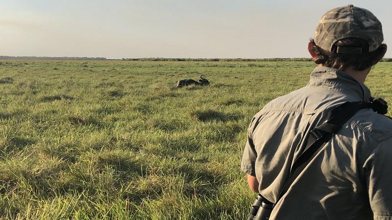 caccia mozambico