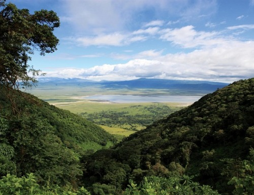 Tanzania: il tempio della caccia africana