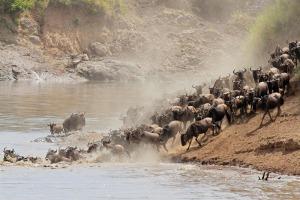 caccia africana
