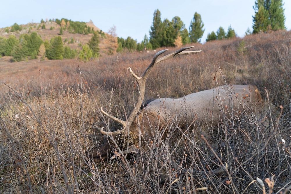 hunting deer in russia