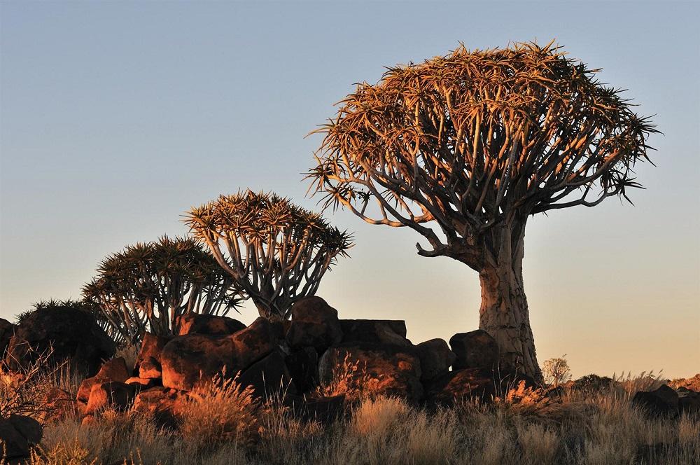 caccia in africa profumo