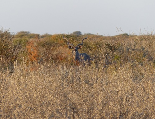 Il profumo della caccia