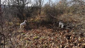 caccia con il cane ausiliare