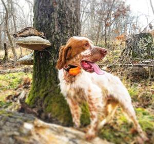 caccia con il cane in bulgaria