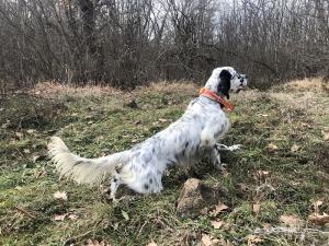 caccia in bulgaria cane da ferma