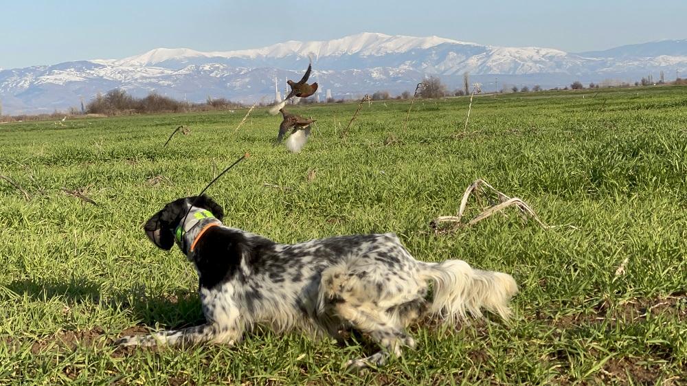 caccia col cane in macedonia